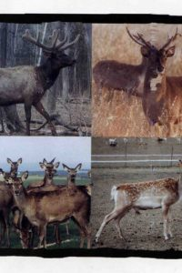 Deer Farming Handbook Cover